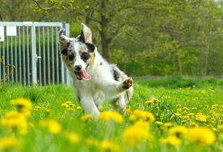 Spring fun.   by Yierith