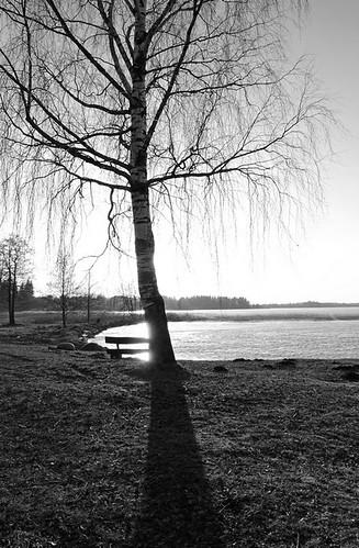 sunset sky blackandwhite lake tree nature sunshine silhouette clouds landscape spring sony latvia lettland aluksne latvija pavasaris daba lettonie debesis mākoņi ezers saulriets alūksne hx400v
