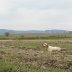 MISS DI VALTRESINARO-A starne in Serbia, marzo 2015.
