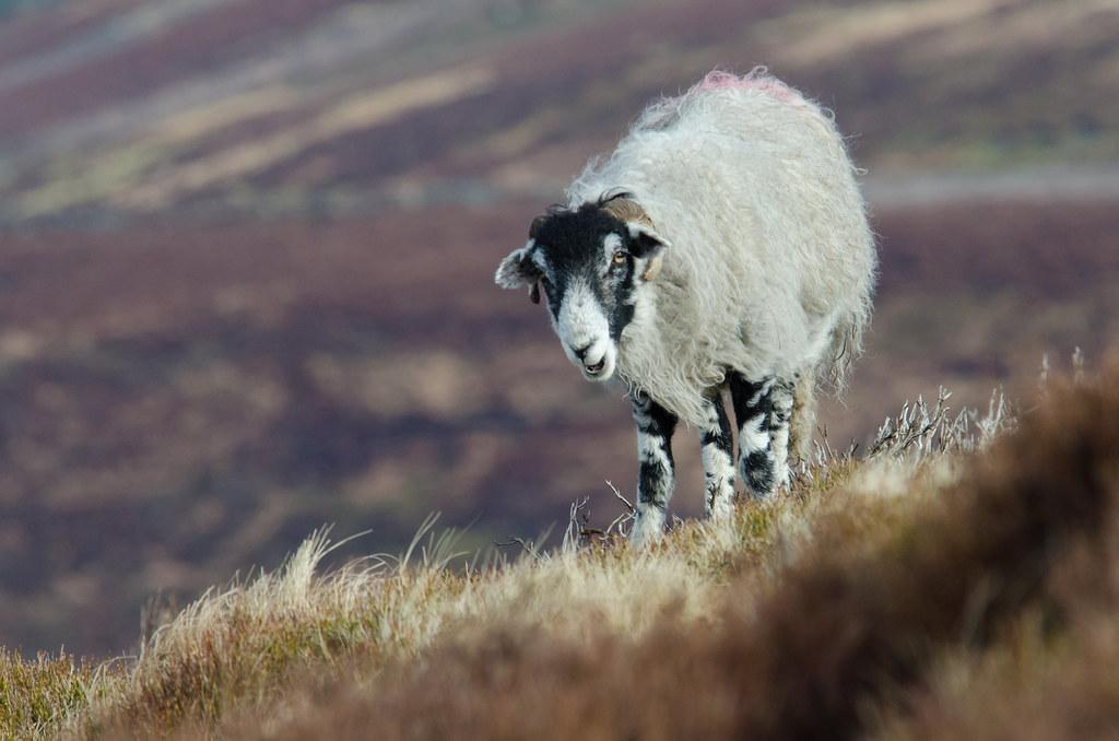 Ewe laughing at me?