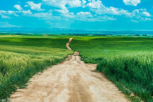 path wheat fields bitronotruhama