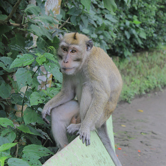 Download Gambar Monyet Galau - Koleksi Gambar HD