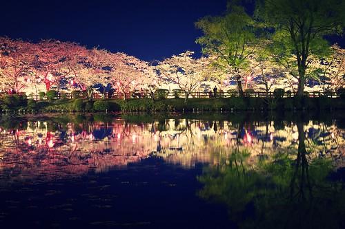 夜桜 | by bjimmy934