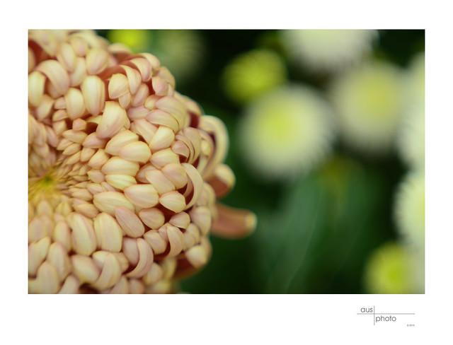 Bendigo Floral