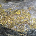Gold and quartz (Main Ledge, 3050 Level, Homestake Mine, Lead, Black Hills, South Dakota, USA) 1