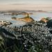 Brasile-01.jpg by tommasogalli80