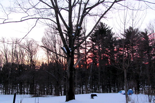 sunset snow evening backyard colorful oaktree pinetrees putnamcounty carmelny othertrees nycreservoir winter2015