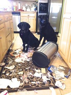 Trash Dogs | by OakleyOriginals