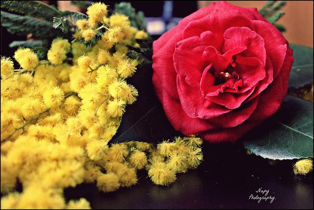 Ogni fiore è segno d'amore.