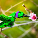 Victor the Violet-eared Hummingbird by Noah_L