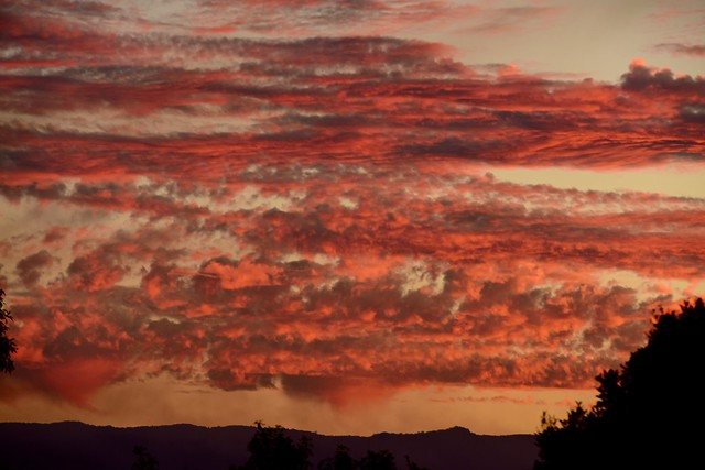 Springbrook Sunset