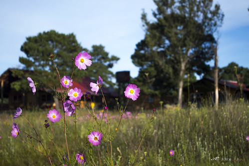 d3200 flor flower pink campo nature