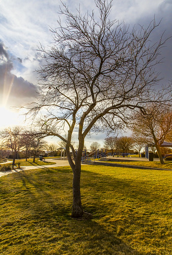 park sunset sky sun newmexico tree grass clouds albuquerque sunburst nm grantcondit