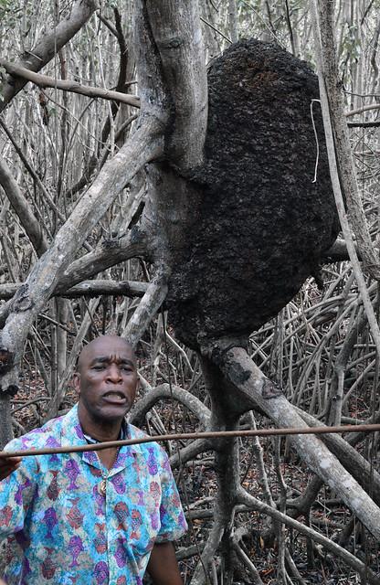 Mr. Penn points out a huge termite nest. St.John USVI