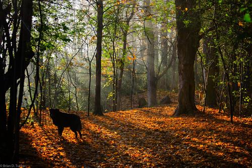 morning november autumn light dog fall fog morninglight conservation greenwood hike area diffusion 2015 elu d610 greenwoodconservationarea november2015 briandtucker