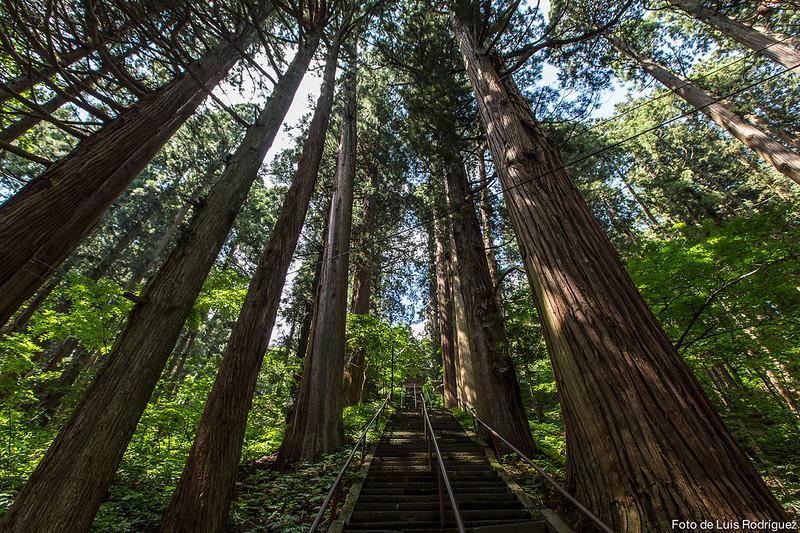 Naturaleza en el santuario Togakushi de Nagano