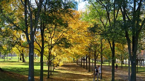 autumnleaves grantpark downtown theloop landmarkdistrict chicago il illinois parks fall autumn cityparks
