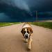 Storm Dog by Matthew Gress