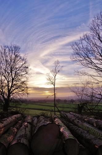 trees logs sunrise pentaxart pentax k50 woods sky clouds light silhouette