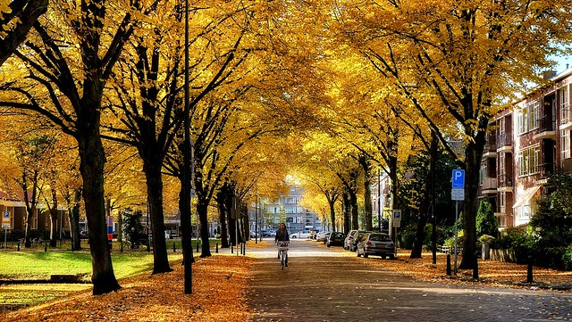 The time of yellow leaves...