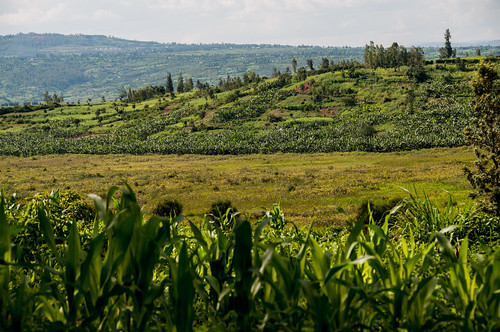 Forages in Rwanda | by CIAT International Center for Tropical Agriculture
