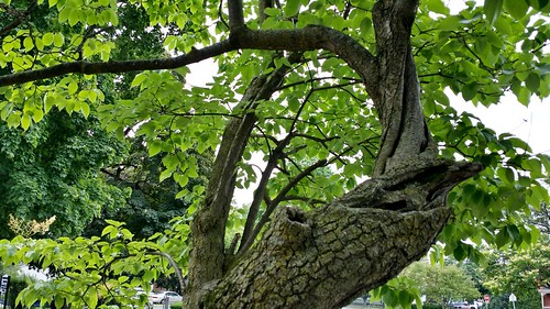 treetuesday