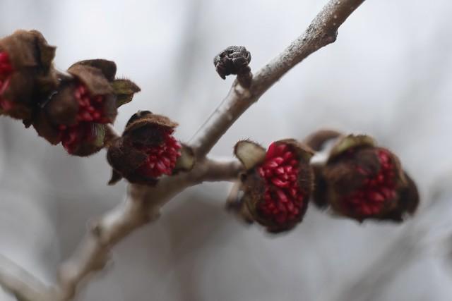 土, 2015-03-28 11:55 - Brooklyn Botanic Garden