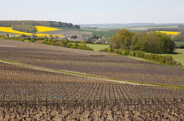 Montagne de Reims, Champagne-Ardenne, France
