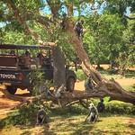 14 Viajefilos en Sri Lanka. Yala 37