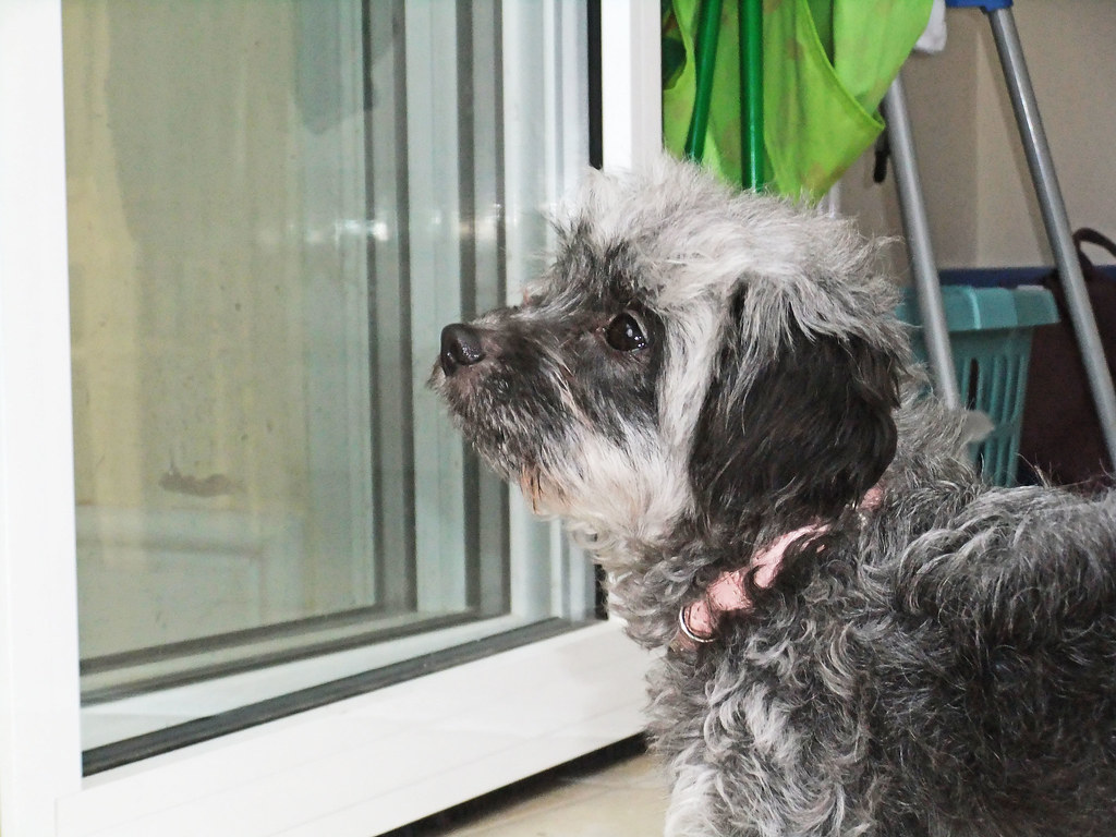 about pets at home