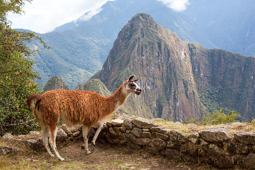 On Top of the World, Llama Love, Machu Picchu