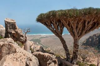 Ile de Socotra_Février 2015_Vue sur la mer d'Arabie du plateau Homlil. | by Pipaillon