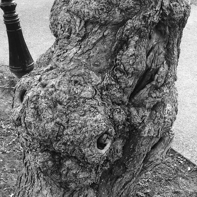 One eye #tree #hdr #nb #bw