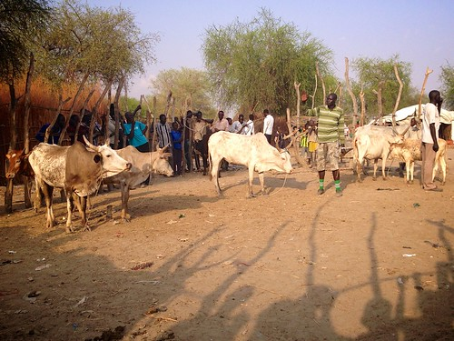 Cattle auction, Lankien, South Sudan