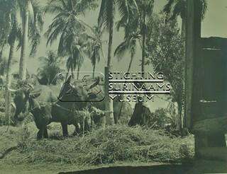 Rijst dorsen | by Stichting Surinaams Museum
