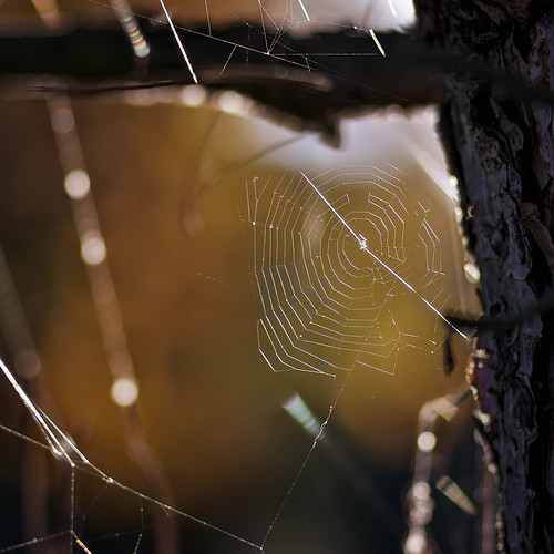 sunset bw backlight zeiss germany de europe bokeh web spiderweb manual mth 135mm shallowdof sonnar carlzeiss ƒ28 vintagelens manuallens manualexposure manualfocusing mkvip manualondigital carlzeisssonnar135mmƒ28t✮