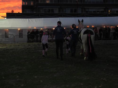 IMG_0007   by paardenmarktameide