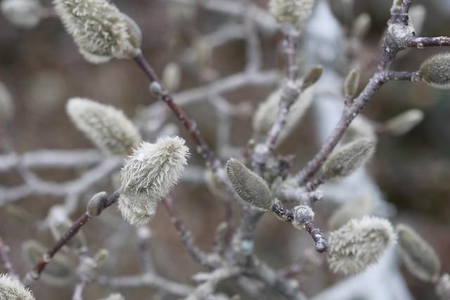 土, 2015-03-28 11:06 - Brooklyn Botanic Garden