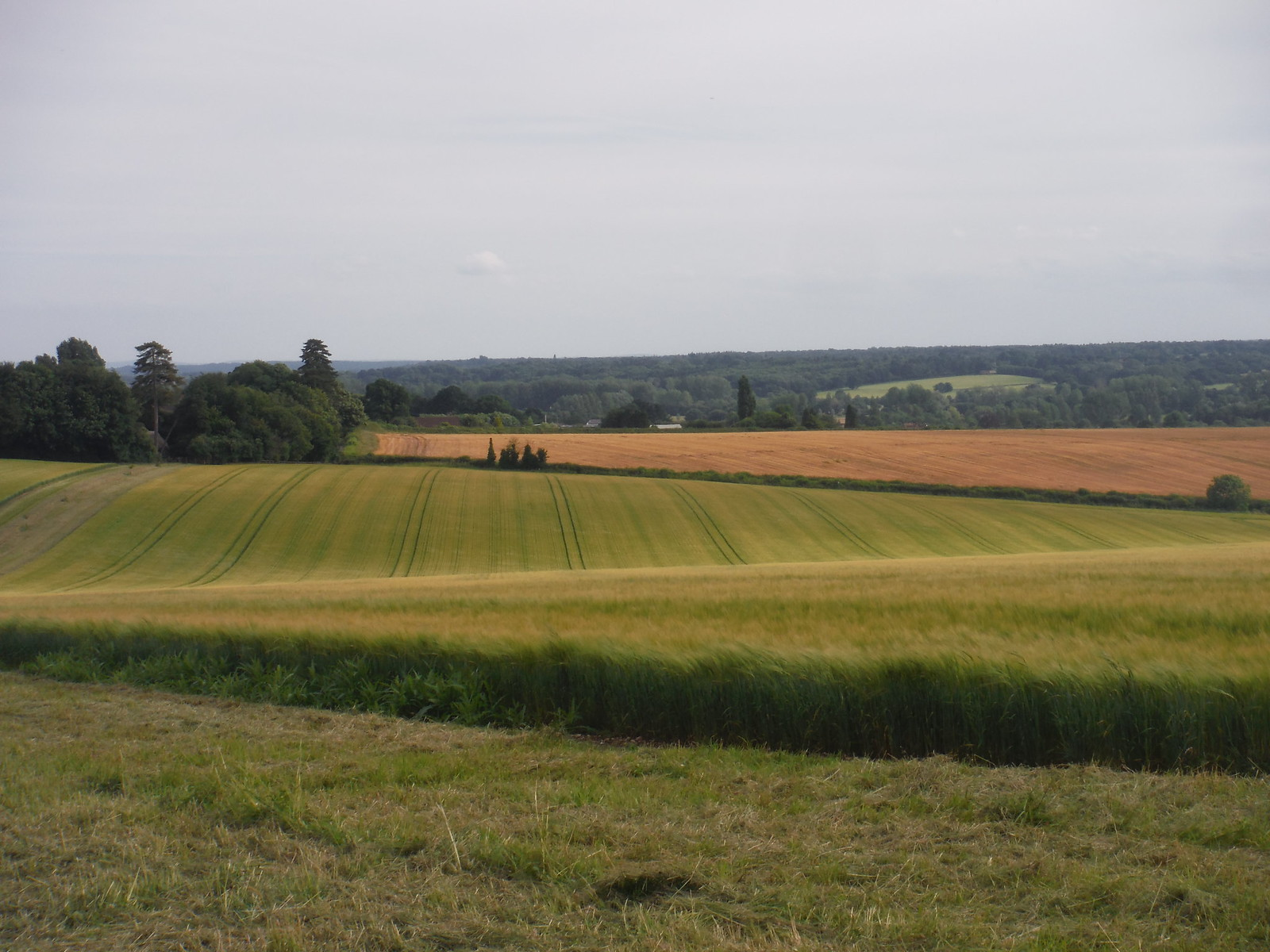 Squabb Wood, beyond the Test Valley, from Michelmersh SWC Walk 265 - Dean to Mottisfont and Dunbridge