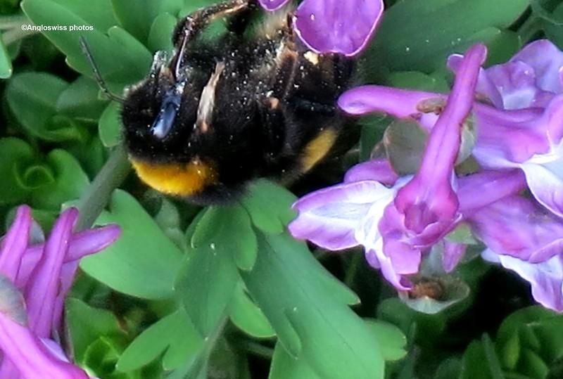 Bee in wild flowers