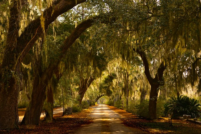 """Savannah is so beautiful that the dead never truly depart."" J. Caskey"