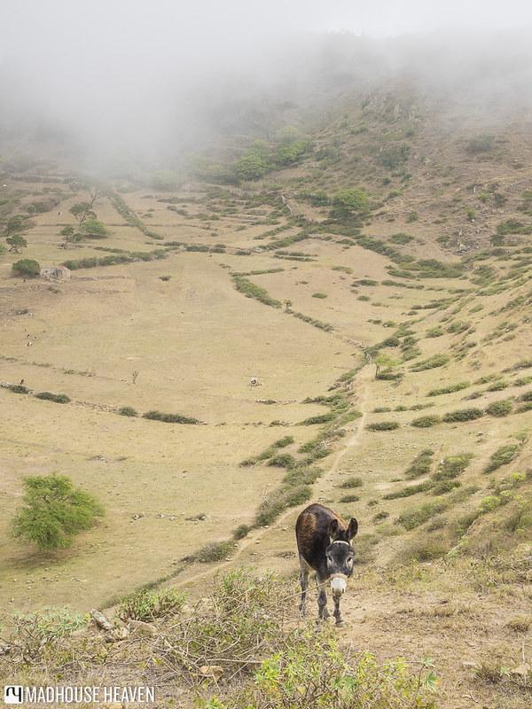Cape Verde - 0678