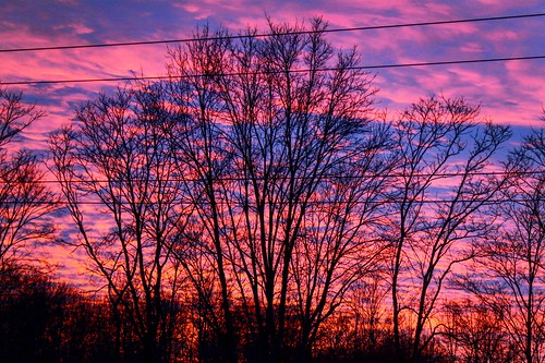 pink blue trees sunset sky black tree canon landscape photography colorful purple bright outdoor dusk serene canonphotography