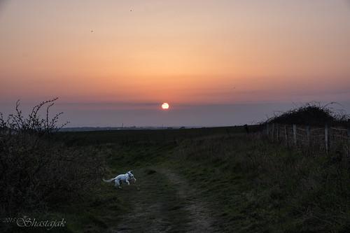 sunset dog fence sql fencefriday