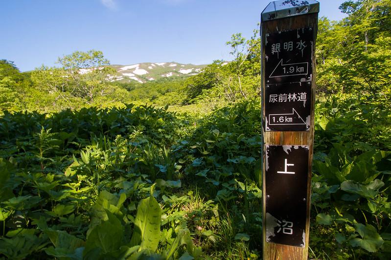 20160611-焼石岳-0204.jpg