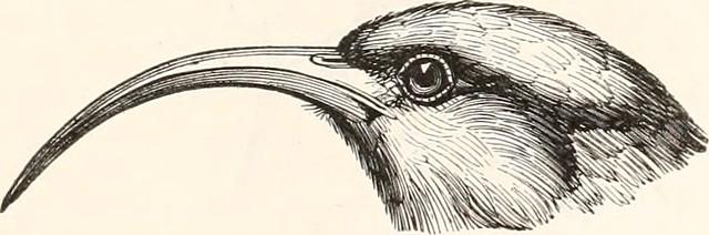 """Image from page 160 of """"Encyclopédie d'histoire naturelle; ou, Traité complet de cette science d'après les travaux des naturalistes les plus éminents de tous les pays et de toutes les époques: Buffon, Daubenton, Lacépède, G. Cuvier, F. Cuvier, Geoffroy Sa"""