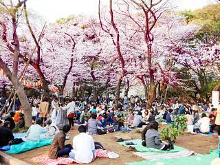 Hanami at Ueno Park 2013 | by Dick Thomas Johnson