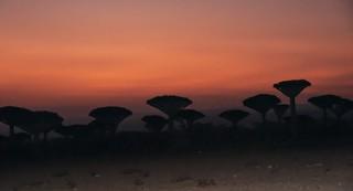 Ile de Socotra_Février 2015_Plateau de Firmin, couleurs au coucher de soleil. | by Pipaillon
