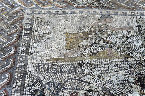 Volubilis: mosaic