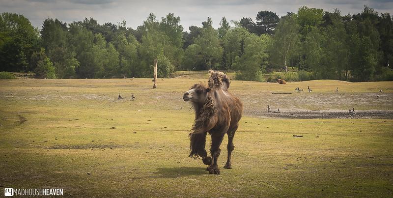 Safaripark Beekse Bergen - 0056